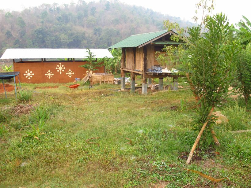 a healthy looking macadamia tree, with rice barn and workshop in the background