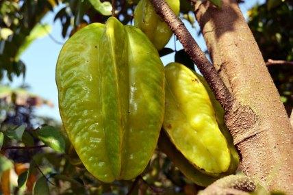 มะเฟือง   Starfruit is another one of Serena's favorite snacks.