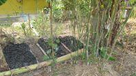 sweet bamboo