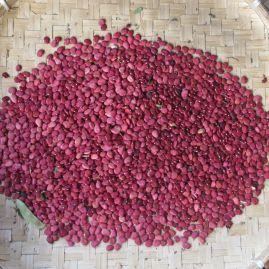 beans 2015