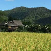 baan son thai